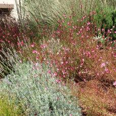 Mediterranean Landscape by GardenCrafters