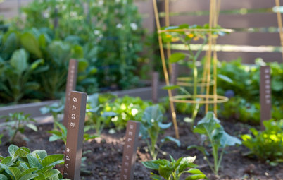 Keep Track of Your Vegetable Garden With Plant Markers