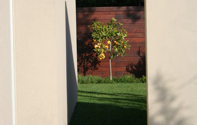 Citrus 101: Start Your Own Backyard Orchard