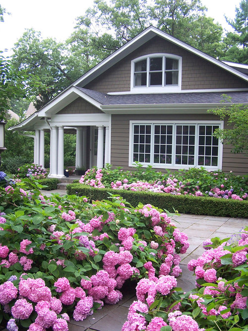 Viburnum suspension good lower hedge home design ideas for Traditional landscape