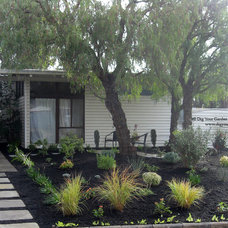 Midcentury Landscape by Dig Your Garden Landscape Design