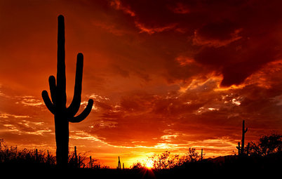 Meet the Mighty Saguaro of the Desert Landscape