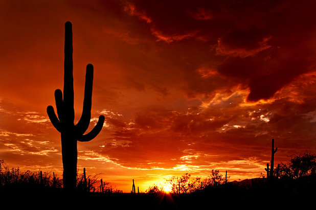 Landscape Might Saguaros Stand Tall in the Desert Landscape