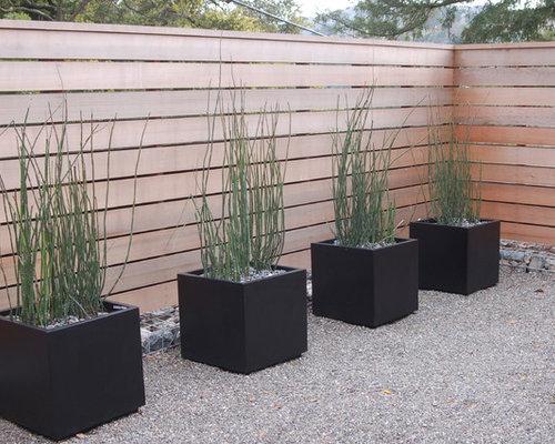 Moderner garten mit k belpflanzen ideen f r die for Moderner kiesgarten