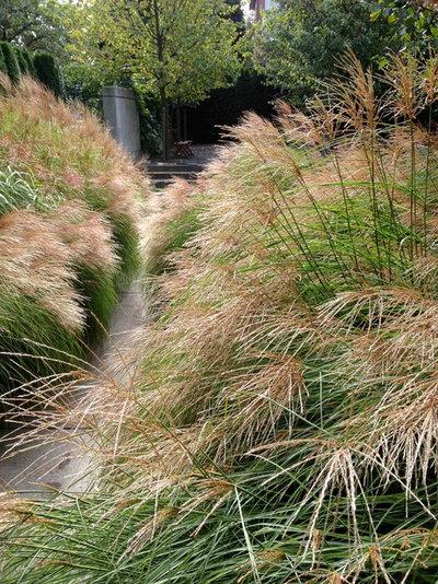 エクレクティック 庭 by CYAN Horticulture