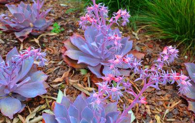 Great Design Plants: Stars of the Succulent Garden