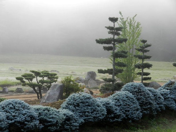 Asian Landscape by Shin-boku Nursery