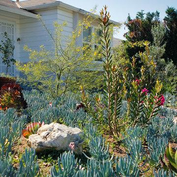 Mixing Succulents, Rocks, Desert Trees Drought Tolerant Garden