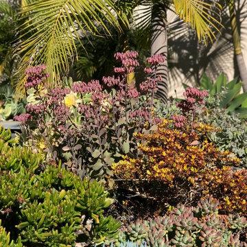 Modern & Drought Tolerant Landscape in Banker's Hill