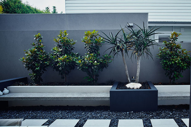 Contemporary Garden by Space Landscape Designs