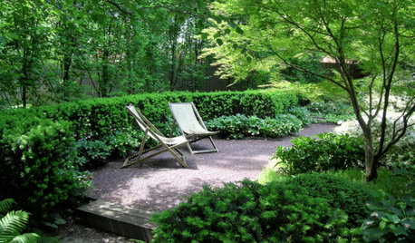 Easy-Care Evergreen Plants and Combos for Stunning Shade Gardens