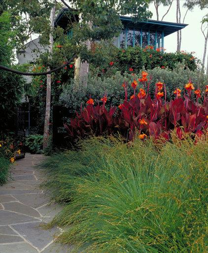 Great Design Plant: Cannas