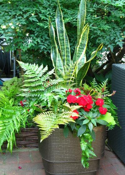 fabulous shadeloving ferns for containers, Natural flower