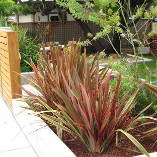 Idées déco pour un jardin avant contemporain.