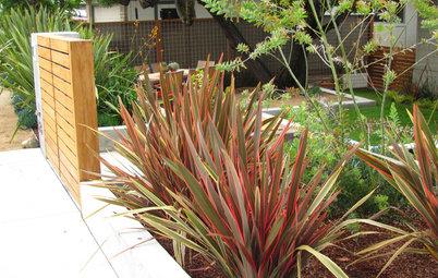 Great Design Plant: New Zealand Flax