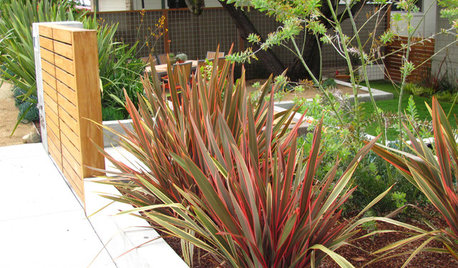 Great Design Plant: New Zealand Flax