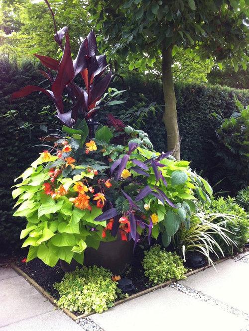 Modern Tropical Garden