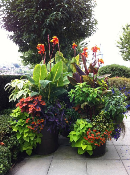 Tropical Landscape by Glenna Partridge Garden Design
