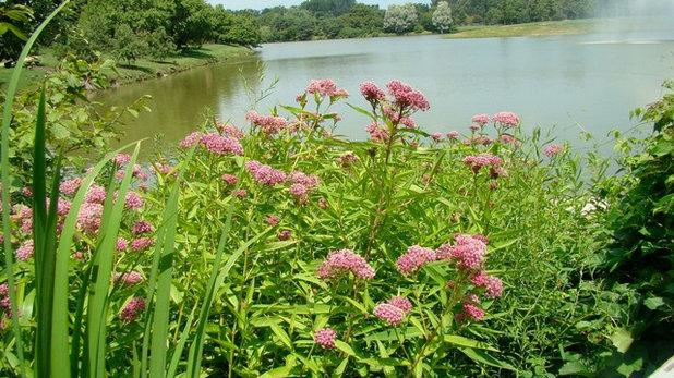 Landscape by naturalmidwestgarden.com