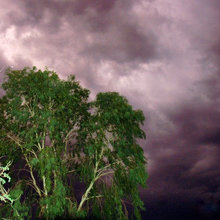 How to Get Your Landscape Ready for Summer Storms