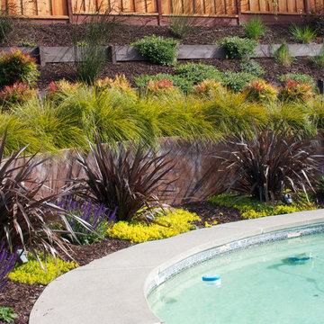 Moraga Hillside Pool