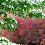 Garden Paths And Landscape Steps Traditional Landscape
