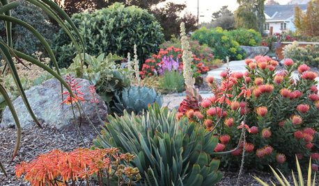 Top 10 Plants for Windy Gardens