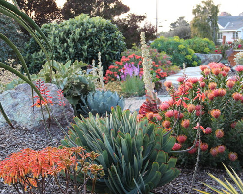 Inspiration For A Mediterranean Drought Tolerant Landscaping In San Luis  Obispo.