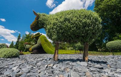 Топиарии: Нестандартные зеленые скульптуры в саду