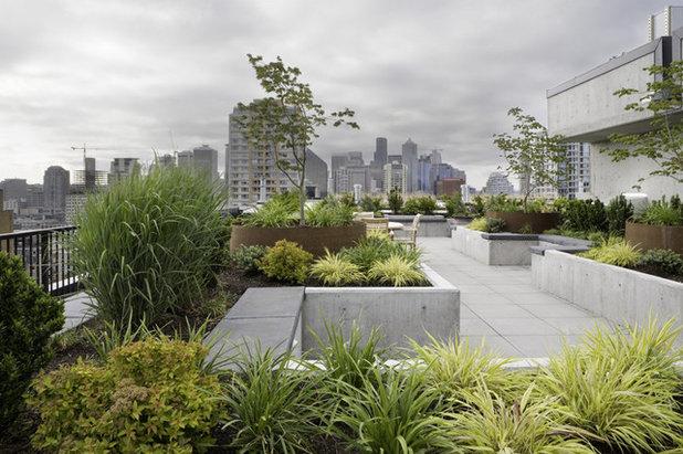 Modern Garden by Kenneth Philp Landscape Architects