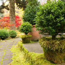 Evoke Mystery and History With Moss in the Garden