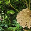 Il Fascino dell'Ombra: Piante e Fiori per Giardini Senza Sole
