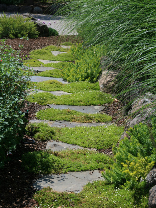 Enchanting Small Garden Landscape Ideas With Stepping Walk: Stepping Stone Path