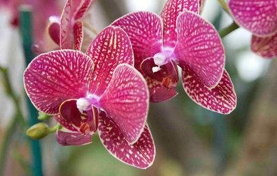 7 astuces de pro pour entretenir une orchidée