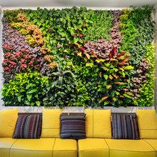 Растения, озеленение.