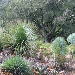 Eklektischer Garten hinter dem Haus in San Francisco
