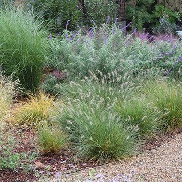 Movement in the landscape:  ornamental grasses