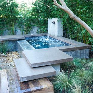 Mittelgroßer, Halbschattiger Moderner Garten im Frühling, hinter dem Haus in San Diego