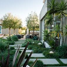 Modern Landscape by MTLA- Mark Tessier Landscape Architecture