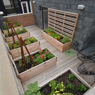 Geometrischer, Mittelgroßer Moderner Garten mit direkter Sonneneinstrahlung und Dielen in Chicago