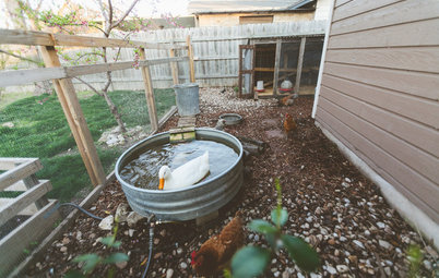 My Houzz: An Urban Farm and Animal Sanctuary in Austin