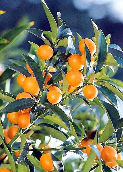 12 der sch nsten gro en zimmerpflanzen f rs wohnzimmer - Zimmerpflanzen sonniger standort ...