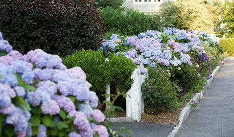Why You Should Give Hydrangeas a Place in Your Yard