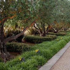 Mediterranean Landscape by Pedersen Associates