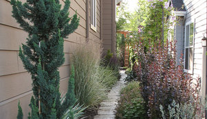 5 best behaved trees to grace a patio for Trees for tight spaces