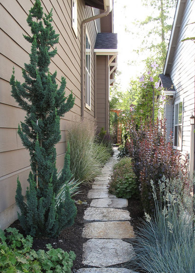Narrow trees for tight garden spaces - Upright trees for small spaces concept ...