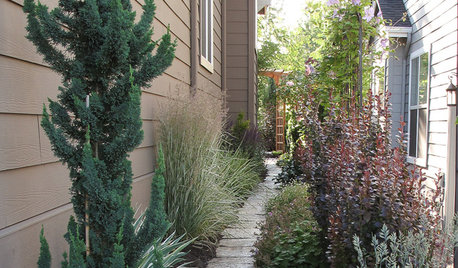 Side yard ideas on houzz tips from the experts - Tall trees for small spaces style ...