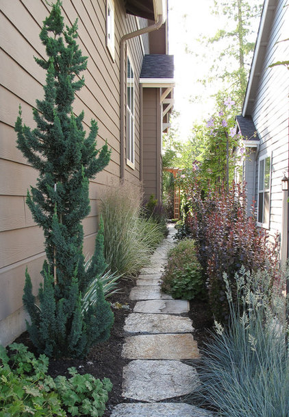 Narrow trees for tight garden spaces for Skinny trees for tight spaces