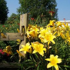Penning Landscape Maintenance Lawton Mi Us 49009