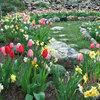 春咲き球根で庭も春支度を